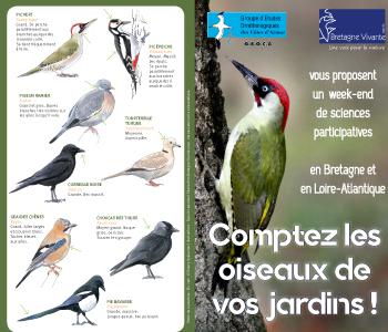 NL_comptage-oiseaux